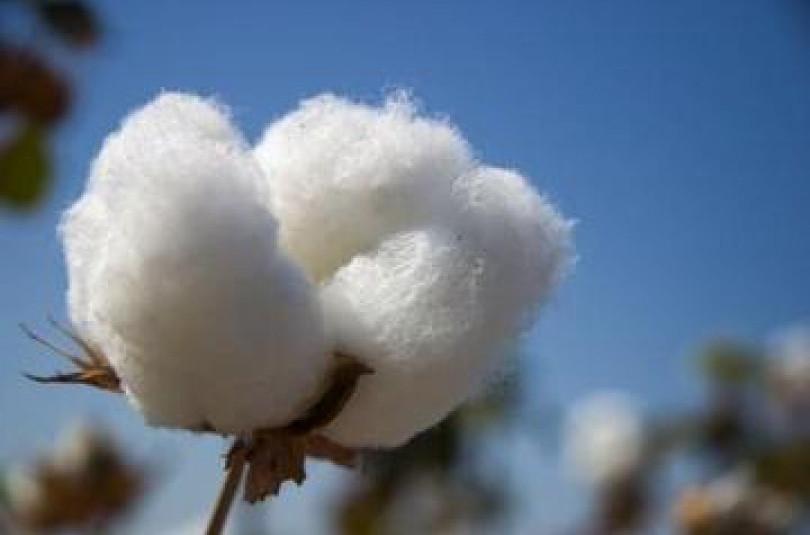 Натуральные волокна растительного происхождения